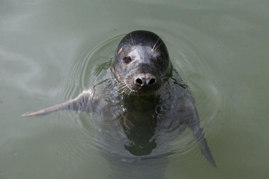 Listen to this seal sing the Star Wars theme. Seriously – CNET