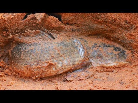 Viral Fishing 2020! Catch Snakehead Fish, Catfish & Frogs in Underground Hole Then Cook for Lunch