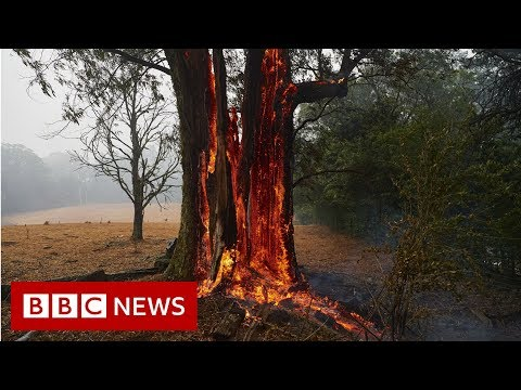 Australia fires: The animals struggling in the crisis  – BBC News