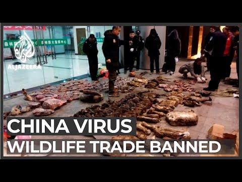 China cracks down on wildlife trade amid coronavirus outbreak