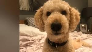 Funny Dog Talking About Coronavirus